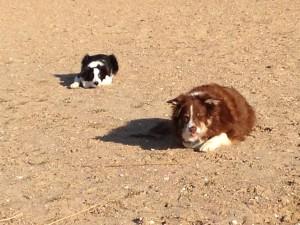 Sarah & Donna op het strand